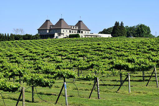 Vineyard, Wine, Grape, Vine, Georgia, Usa, Alcohol, Red