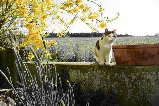 Cat, Mieze, Pet, Nature, Domestic Cat, Branches, Spring
