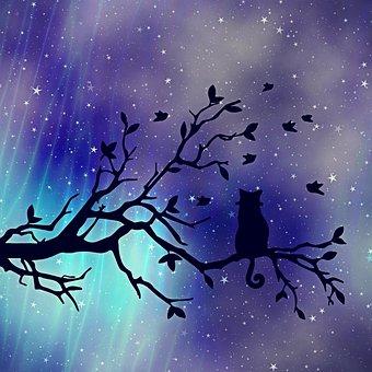 Texture, Background, Cat, Tree, Night Sky, Evening Sky
