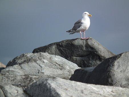 Seagull, Rocks, Ocean, Stone, Seascape, Shore, Coastal