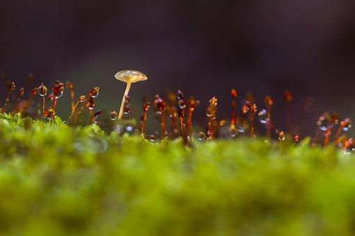 Mushroom, Moss, Thriving Moss, Sponge