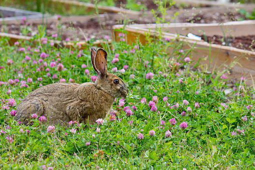 Rabbit, Wildflowers, Bloom, Grass, Spring, Bunny