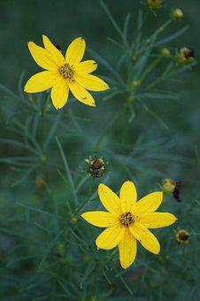 Flowers, Wildflowers, Yellow, Spring, Wild, Summer
