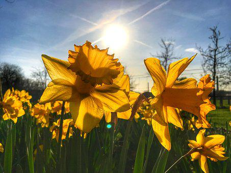 Easter, Flower, Yellow, Spring, Plant, Bright, Colorful