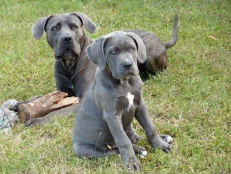 Dog, Puppy, Mom, Baby, Grand, Animals, Animal