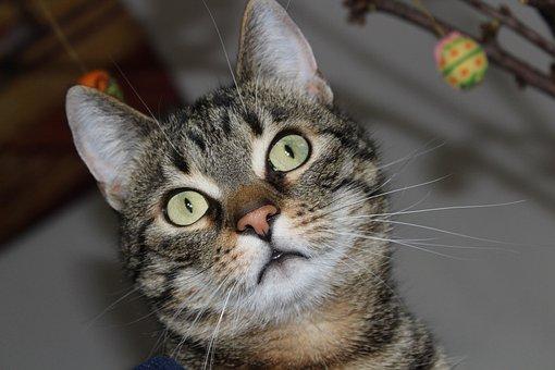Cat, Cute, Close, Cat's Eyes, Beautiful, Sweet, Pretty