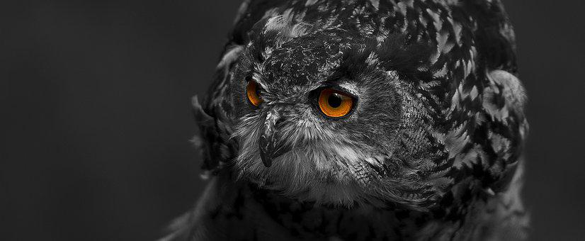 Eagle Owl, Bird, Eyes, Feather, Bird Of Prey, Raptor