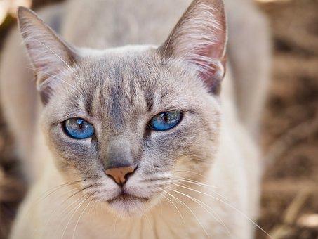 Cat, Feline, Domestic Animals, Domestic, Animal
