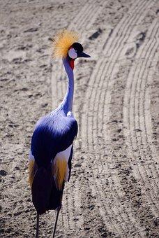 Crane, Bird, Golden