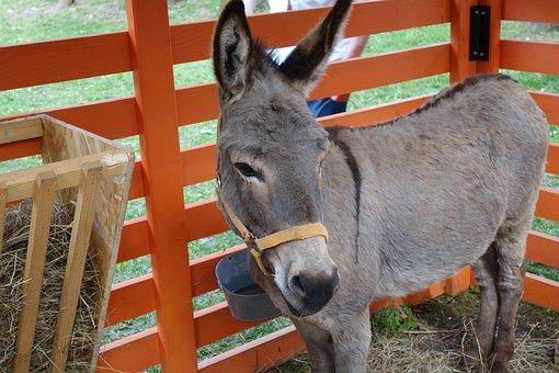 Donkey, Animal, Grey, Exhibition, Cute