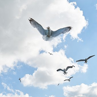 Seagull, Bird, Fly, V, Nature, Clouds, Peace, Landscape