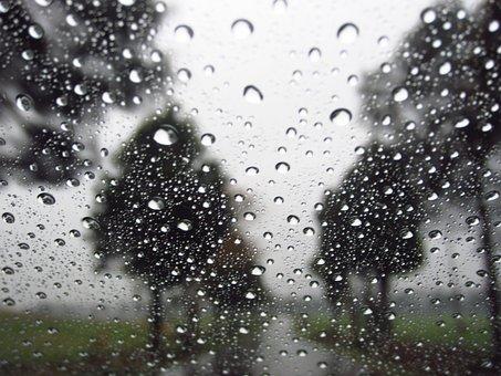 Raindrops, Trees, Background, Rain, Nature, Drop, Wet
