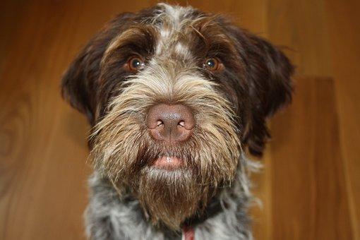 Dog, Animals, Domestic Animal, Pet Dog, Portrait, Race