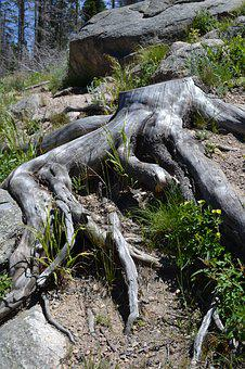 Tree Roots, Roots, Tree With Roots, Environment, Forest