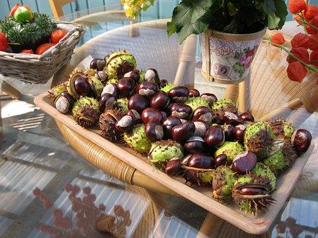 Chestnut, Autumn, Decoration, Shell