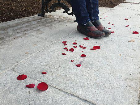 Red Rose, Red Petals, Petals, Shoes, Park, Concrete
