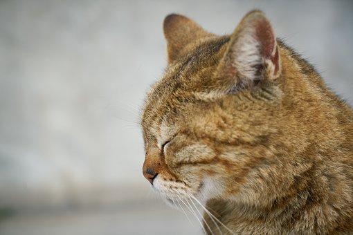 Cat, Animal, Cute, Animal Portrait, Pets, Overview
