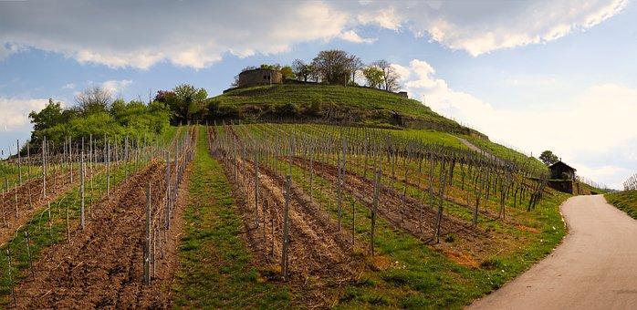Vineyard, Castle, Ruin, Weibertreu, Wine, Vines