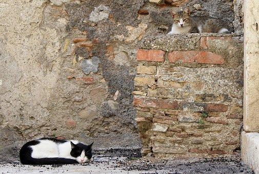 Castelmola, Sicily, Italy, Italian City, Cat Nap