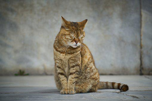 Cat, Street, Animal, Cute, Pets, Nature, Animals, Sweet
