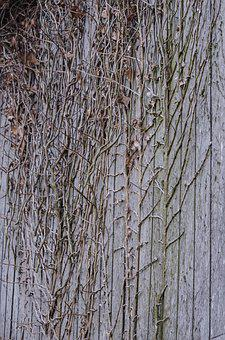 Wood, Branches, Wall, Grey, Old, Texture, Decor