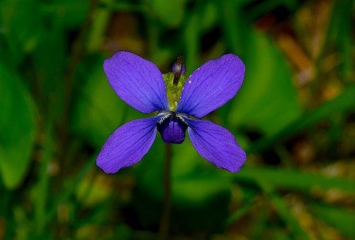 Flower, Blue, Nature, Floral, Spring, Leaf, Plant