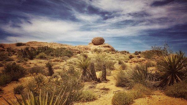 Joshua Tree, Desert, Joshua, California, Tree, Nature