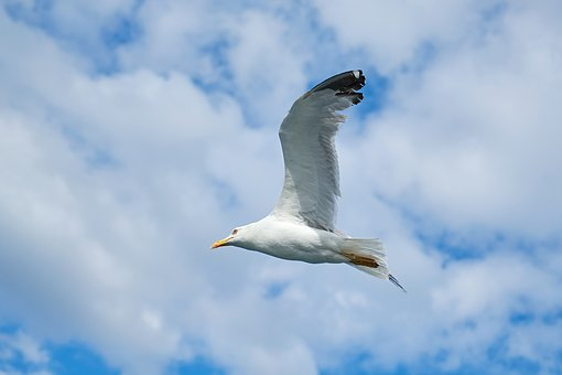 Seagull, Bird, Blue, Sky, Nature, Landscape, Animal