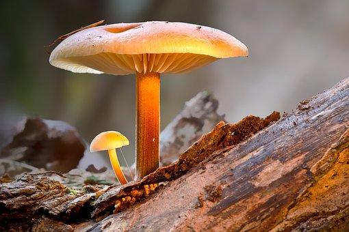 Mushroom, Mini Mushroom, Protected, Sponge, Large Small