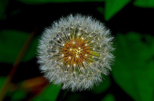 Flower, Nature, Floral, Spring, Leaf, Plant, Green