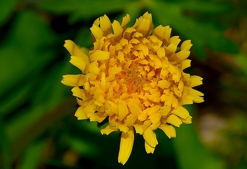 Flower, Yellow, Nature, Floral, Spring, Leaf, Plant