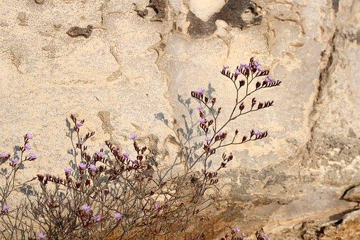 Flower, Plant, Purple, Violet, Nature, Blossom, Bloom