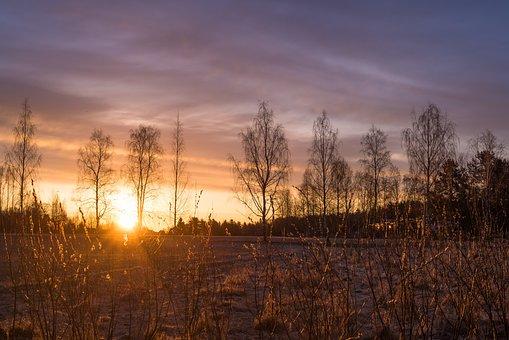 Grass, Nature, Sun, Rise, Spring, Sunny, Sunlight