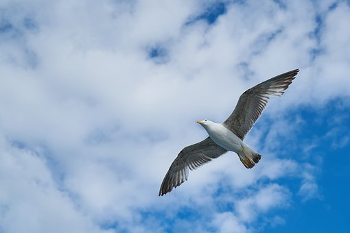 Seagull, Bird, Blue, Sky, Nature, Landscape, Animal