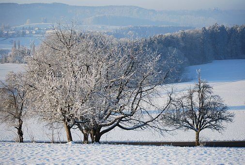 Winter, Snow, Wintry, Cold, White, Landscape, Snowy