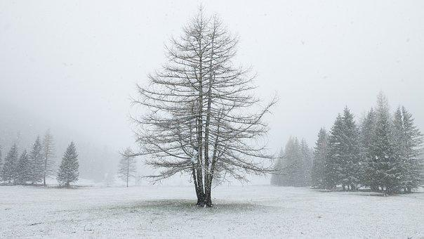 Alp, Alm, Winter, Snow, Meadow, Tree, Snowfall