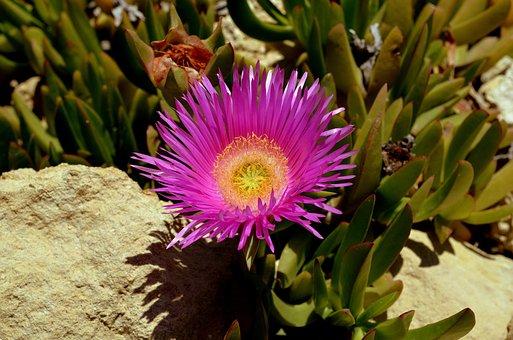 Flower, Australian Bush Flower, Purple, Blossom, Bloom
