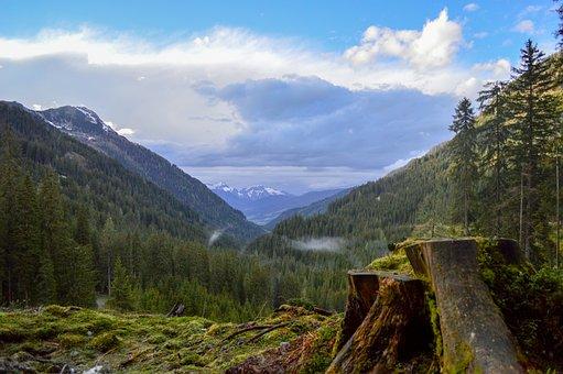 Log, Tree, Forest, Clouds, Sky, Austria, Green, Blue