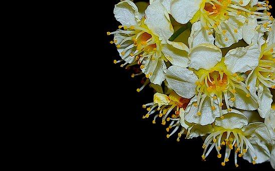 Flower, Bloom, Spring, Nature, Floral, Blooming, Plant