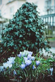 Flowers, Green, Nature, Purple, White, Blossom, Bloom