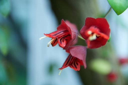 Blossom, Bloom, Macro, Flower, Wild Plant, Exotic