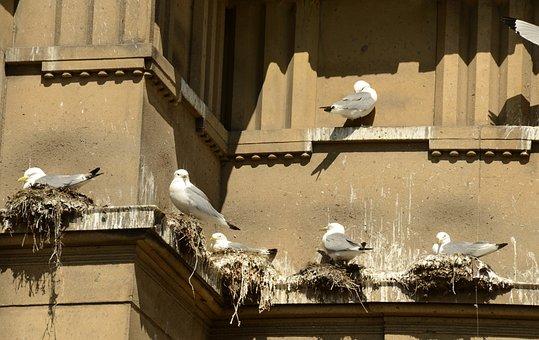 Seagull, Bird, Hatch, Nest, Boy, Parents, Shit, Stool