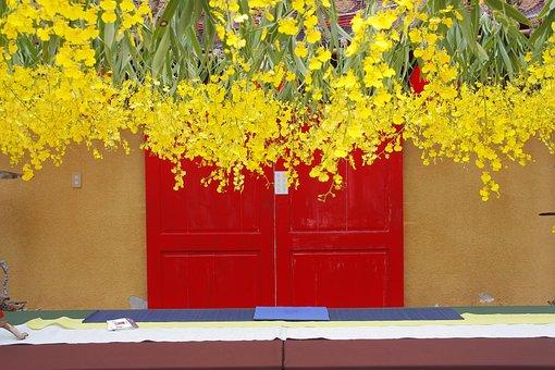 Oncidium, Dancing Blue, Fresh Yellow, Red Door, Hanging