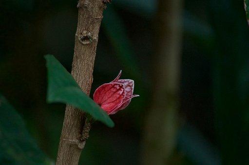 Blossom, Flower, Close, Green, Pink, Dark, Nature, Tree