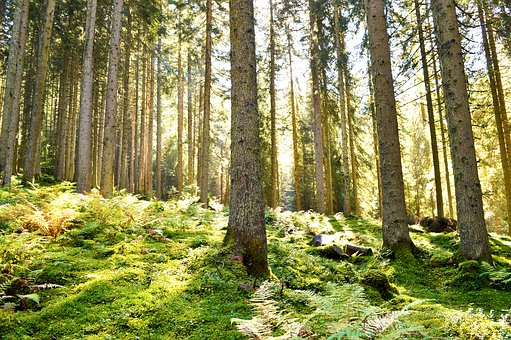 Forest, Light, Green, Energy, Austria, Sun, Landscape