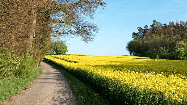 Landscape, Oilseed Rape, Field, Field Of Rapeseeds