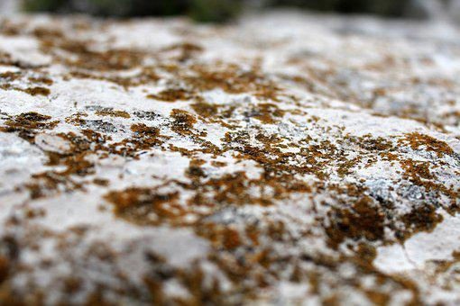 Stone, Macro, Lichen, Weave, Close, White, Yellow