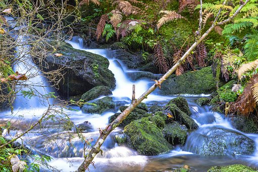 Water, Bach, Austria, Green, Stones, Moss, Forest