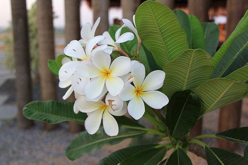 Flower, White, Petal, Yellow, White Flower