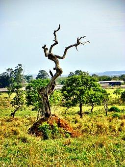 Cerrado, Deforestation, Goiás, Goiânia, Brazil